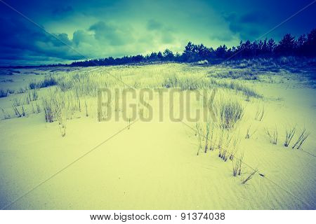 Vintage Photo Of Beautiful Sea Shore With Wild Grass