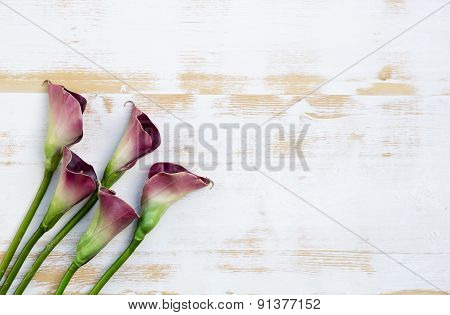 Purple Calla Lilies On White Wooden Background