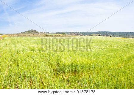 Sea Green Wheat