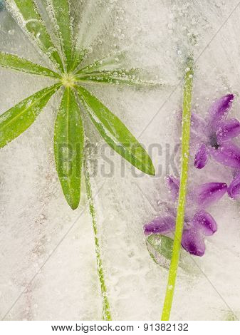 Leaf Lupine And Purple Hyacinth