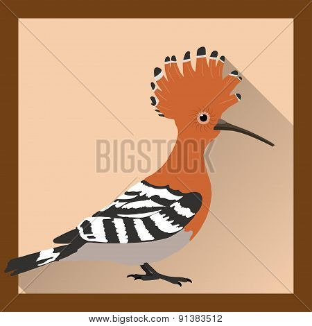 Bright Hoopoe