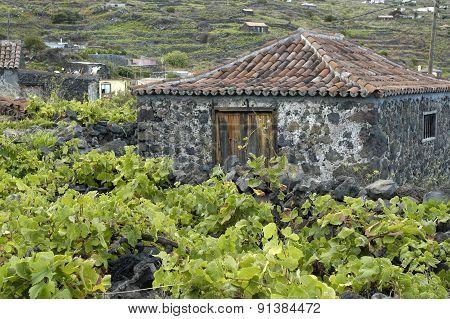 among the vineyards
