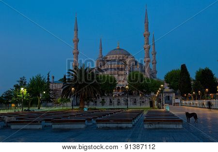 Sultan Ahmed Mosque In Istanbul Early In The Morning Before Dawn To Stand On The Foreground A Dog