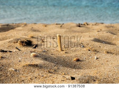 Sand summer beach with sea shells and sea on the background