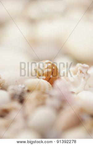 close up of shells