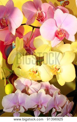 Orchids Different Colors