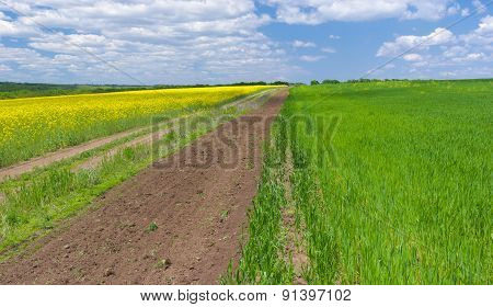 Spring landscape with rape-seed and wheat fields