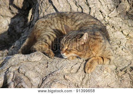 Sleeping Cat Under A Tree