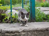 stock photo of homeless  - Homeless gray cat released on the search for food - JPG