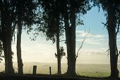 stock photo of pastures  - Row of Bluegum trunks in silhouette along fence in foggy early morning with green grazed pasture behind under blue sky with light cloud - JPG
