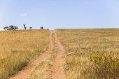 stock photo of wilder  - Dirt road tracks over hillside wilderness wildlife landscape - JPG