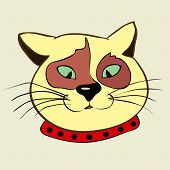 pic of fanny  - Fanny cat face isolated - JPG