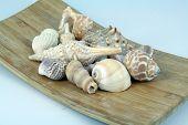 image of shells  - Sea shells on a wooden board - JPG