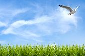 foto of grass bird  - field of grass under sky and flying bird background - JPG