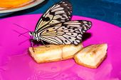pic of butterfly  - Butterfly Papilio Swallowtail butterflies are large colorful butterflies in the family Papilionidae - JPG