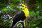 pic of toucan  - Close up of colorful keel - JPG
