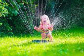 pic of fountain grass  - Child playing with garden sprinkler - JPG