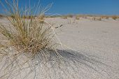 picture of dune grass  - Close up view of dune grass on island of Sylt - JPG