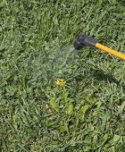 image of pesticide  - Device of spraying pesticide at the sunshine produces a rainbow over green grass - JPG