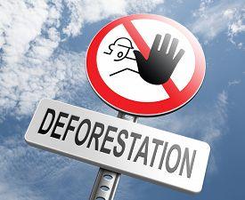 picture of rainforest  - stop deforestation - JPG