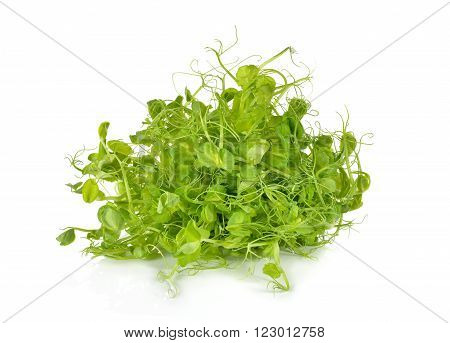 heap of snow pea sprouts or Toumyou sprouts on white background
