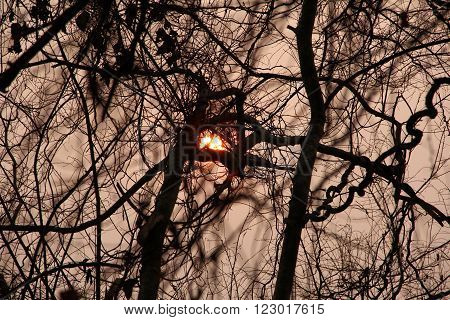 Sunset Sun disc through twisted dry branches. Good for Meditation and Concentration. Dry season in Lao.