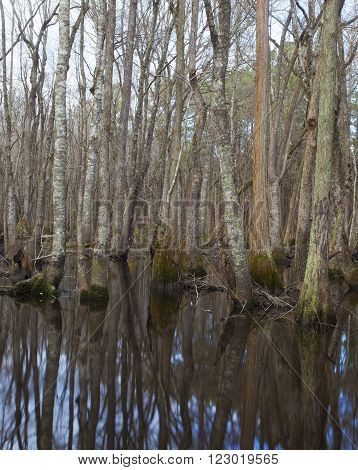 Trees reflecting in the water on the Lumber River in North Carolina