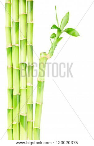 green bamboo stems with leaves border isolated on white background