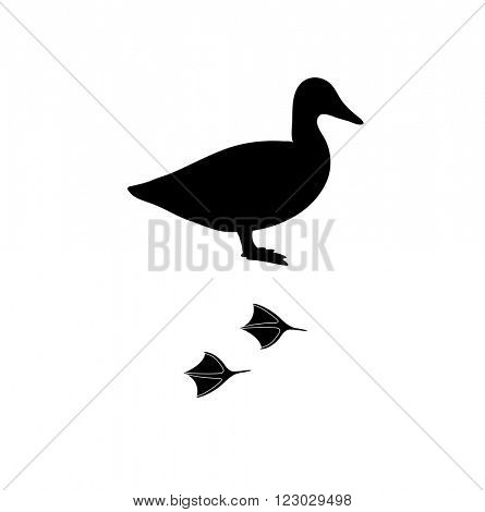 Wild duck animal black silhouette and wild animal predator symbol. Predator silhouette. Wild life black animal silhouette. Black silhouette wild animal zoo vector.