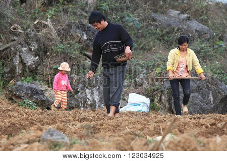 HA GIANG, VIETNAM - FEB 6, 2014: Unidentified Vietnamese minority family starting a new season of corn in the field on the valley of Dong Van rocky highland (a member of the Global Geopark Network).