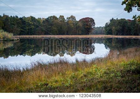Still lake in nature reservation Hilversum. Hilversums Wasmeer