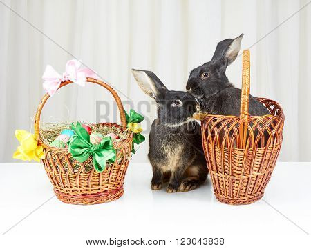 Two rabbits sitting beside Easter basket on the white background