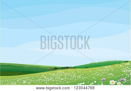 Vector illustration of flower field during summer
