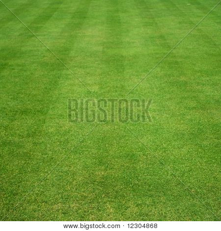 lawn of grass cut with parallel stripes