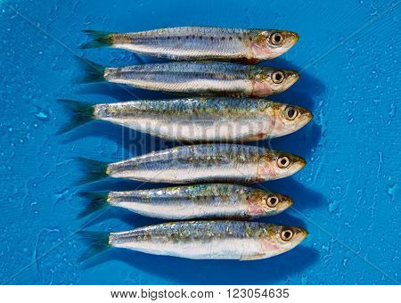 Sardine fishes in a row on a blue wet background