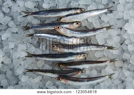 Anchovies fresh fishes on ice in a row
