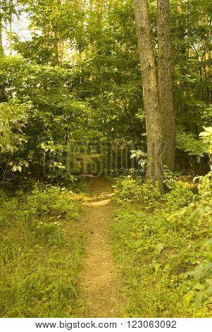 Path through a sunlit forest (as a landscape)