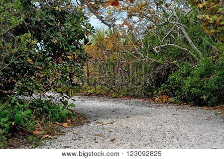 A sand road or pathway leads through trees at Barefoot beach Bonita Springs/ Naples Florida.