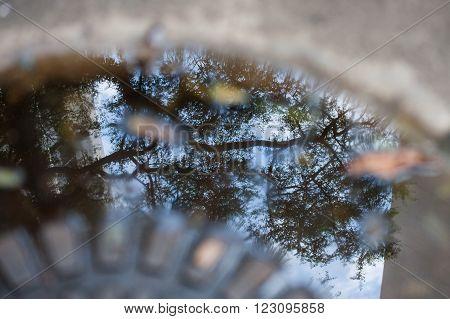 Reflex image of trees on manhole puddle