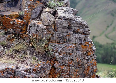 Stone rock cliff with colorful lichen and grass