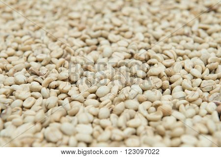 Coffee Beans Dried In The Sun