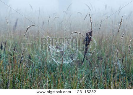 Cobweb On The Grass
