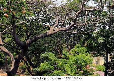 beautiful nature outdoor look in Mysore India