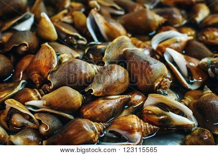 Food Background with Mollusc at a Fresh Market in Thailand. Sea Food. Selective Focus.