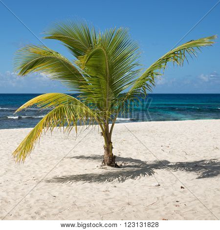Tropical beach with palm tree in Guadeloupe, Caribbean Sea