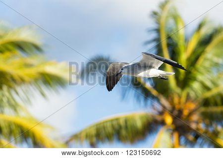 Seagull Among Palm Trees