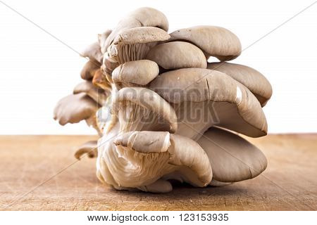 Branch of oyster mushroom, Pleurotus ostreatus, on wooden plate and white background