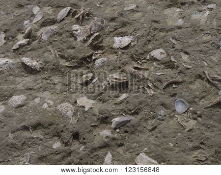 Fossilised sea-shells as seen in Patagonia Argentina.