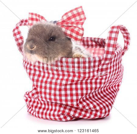 Cute little rabbit bunny in red plaid pet bag