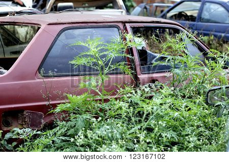 wrecked car abandoned in desolate place covered with herbs